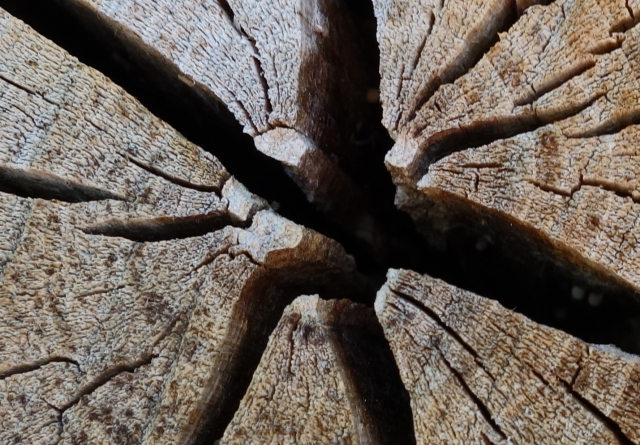 Cracked Stump2