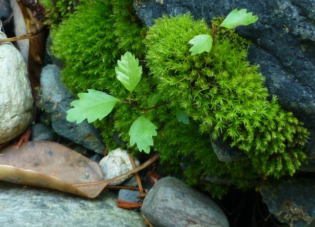 Moss Comp