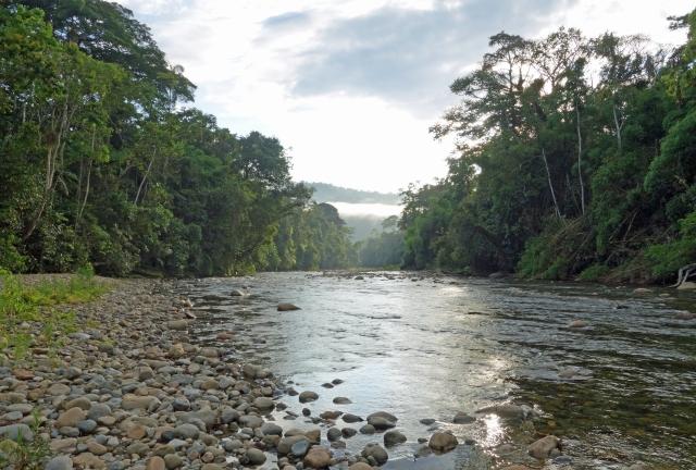 Amalia River Sunrise Peru_edited-1