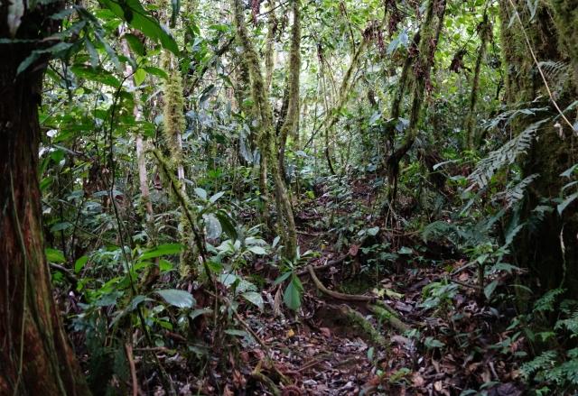 Jungle SP Peru