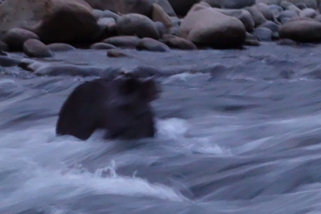 Tapir5