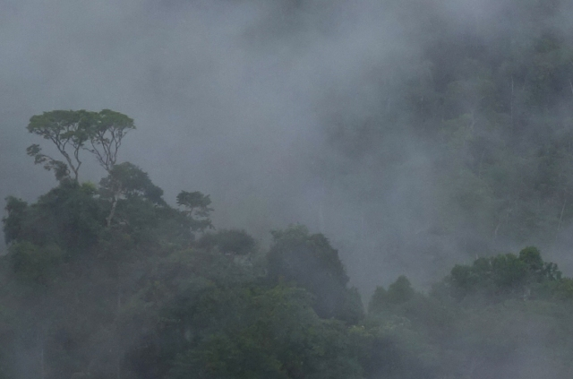 Trees Mist VC Peru_2